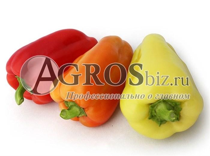 Семена перца Яника F1 1000 шт - фото 9468