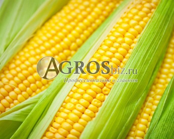 Семена кукурузы ГХ 5704 F1 100 000 семян - фото 9483