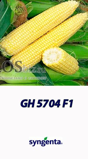 Семена кукурузы ГХ 5704 F1 100 000 семян - фото 9484