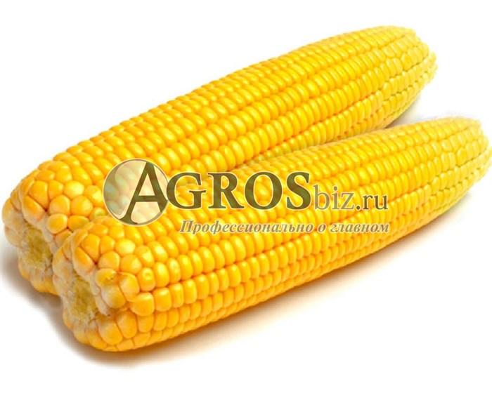 Семена кукурузы Турбо F1 100 000 семян - фото 9485