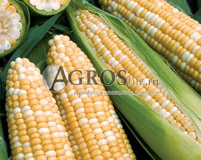 Семена кукурузы Роузи F1 5000 шт - фото 9502