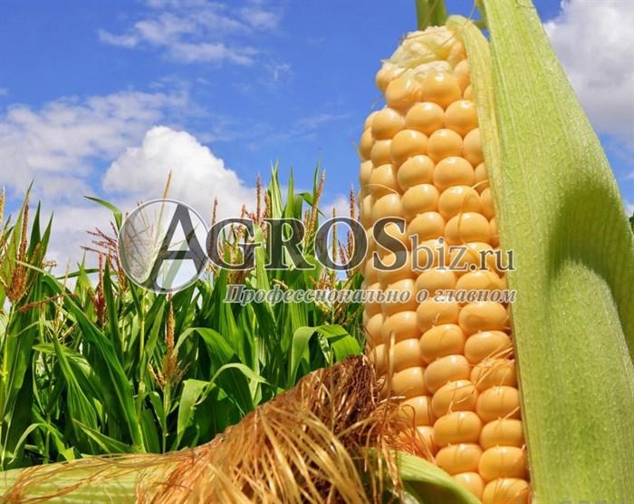 Семена кукурузы Мегатон F1 50 000 шт - фото 9528