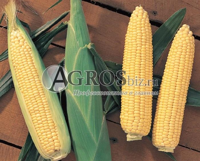 Семена кукурузы Сентинель  F1 5000 шт - фото 9535