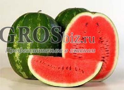 Семена арбуза Каристан F1 1000 шт - фото 9583