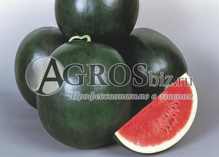 Семена арбуза Дулзор F1 1000 шт - фото 9591