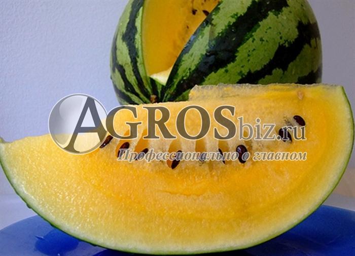 Семена арбуза Шампань F1 1000 шт - фото 9592