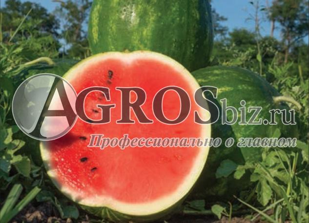 Семена арбуза Юлия F1 1000 шт - фото 9598