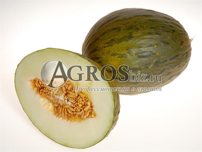 Семена дыни Сисапо F1 (Пиел де Сапо) 500 шт - фото 9650