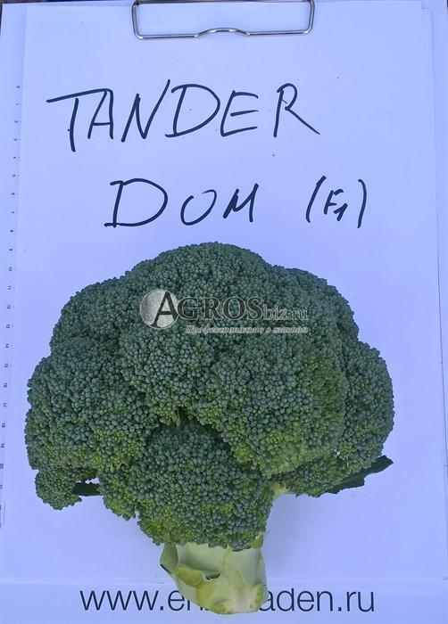 Семена капусты брокколи Тандер Дом F1 2500шт - фото 9951