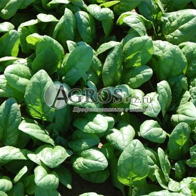 Семена шпината Акадия F1 100 000 шт
