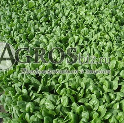 Семена шпината Шелби F1 100 000 шт