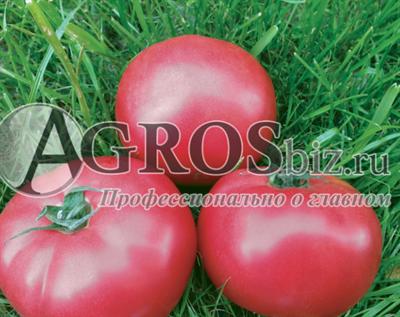 Семена томата Пинк Кристал F1 250шт