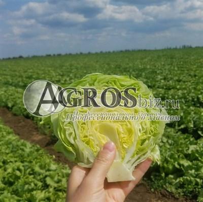 Семена салата Даймонд 5000 шт (драже)