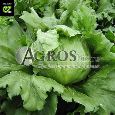 Семена салата Дамион 5000 шт (драже)