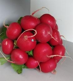 Семена редиса Селеста F1 50 000 шт (калибр.2.75-3.00)