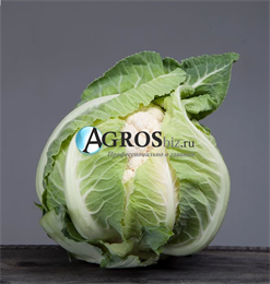 Семена цветной капусты Ардент F1 2500 шт