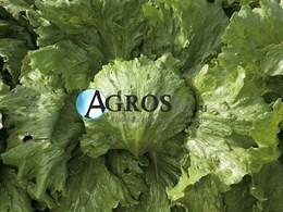 Семена салата Фарито 5000 шт (драже)
