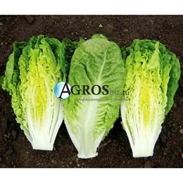 Семена салата Ксанаду 5000 шт (драже)