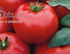 Семена томата Томск F1 (Бейо)