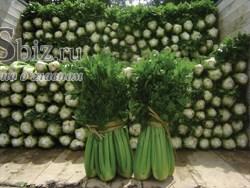 Семена сельдерея черешкового Танго 10 000