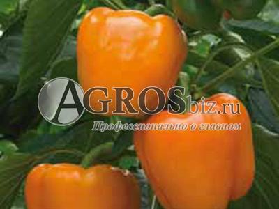 Семена перца Магно F1 500 шт
