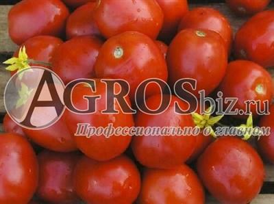 Семена томата Лампо F1 1000 шт