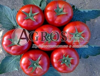 Семена томата Лоджейн F1 1000 шт