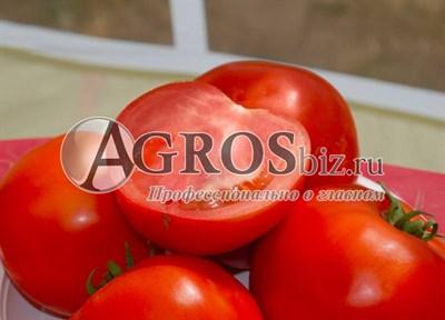 Семена томата Бобкат F1 1000шт