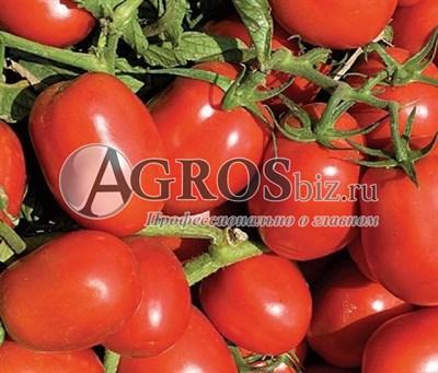 Семена томат Дельфо F1 1000 шт