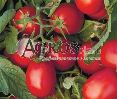 Семена томата Астерикс F1 2500шт