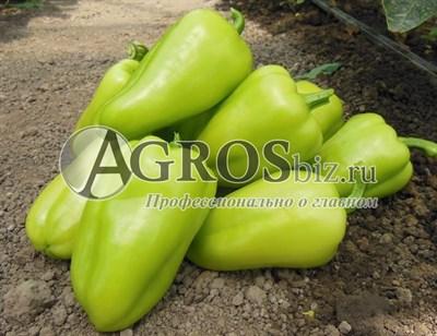 Семена перца Амаретта F1 500 шт