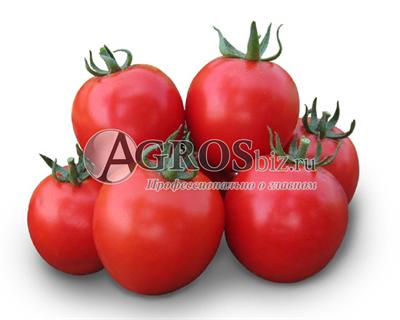 Семена томата Асвон F1 5000 шт