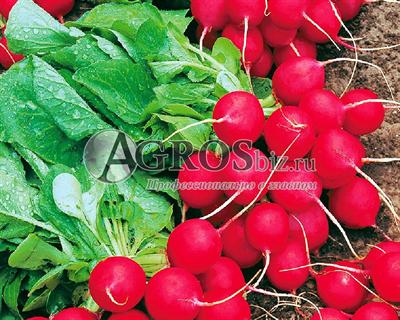 Семена редиса Эскала F1 50 000 шт (калибр. 2,50-2,75 мм)