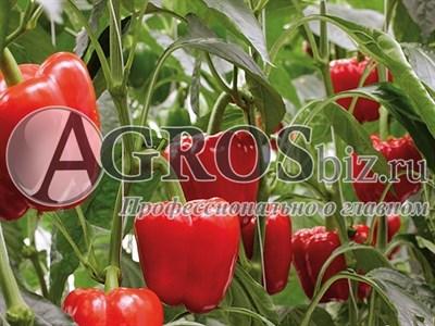 Семена перца Лозорно F1 500 шт