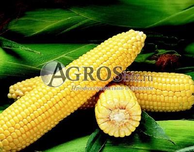 Семена кукурузы Бостон F1 1 кг