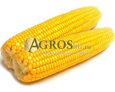 Семена кукурузы Турбо F1 100 000 семян