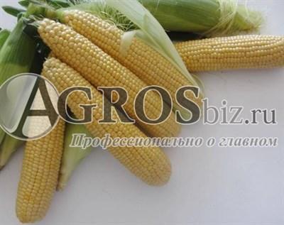 Семена кукурузы Кокани  F1 5000 шт