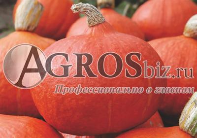 Семена тыквы Оранж Саммер F1 500 шт