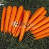 Семена моркови Лагуна F1 калибр 1,6-1,8 100 000 шт - фото 10034