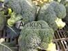 Семена капусты брокколи Корато F1 2500шт - фото 10040