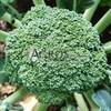 Семена капусты брокколи Корато F1 2500шт - фото 10076