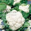Семена цветной капусты Брюс F1 2500 шт - фото 10077