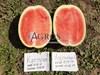 Семена арбуза Астрахан F1 1000 шт - фото 10107