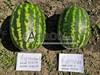 Семена арбуза Астрахан F1 1000 шт - фото 10123
