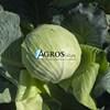 Семена капусты Саксесор F1 2500 шт - фото 10566