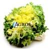 Семена эндивия Домари 5000 шт (драже) - фото 10606