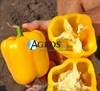 Семена перца Соланор F1 1000 шт - фото 10695