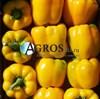 Семена перца Соланор F1 1000 шт - фото 10697