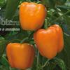 Семена перца Магно F1 500 шт - фото 8806