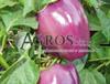 Семена перца Текила F1 500 шт - фото 8814